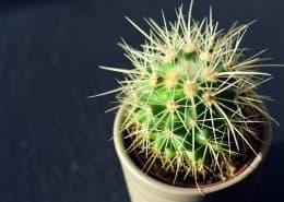 Ein grüner Kaktus